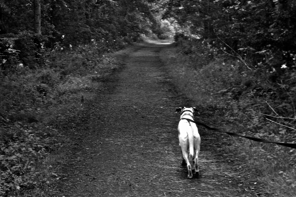 Black and white shot of a dog on a path.